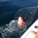 snapper fishing charters